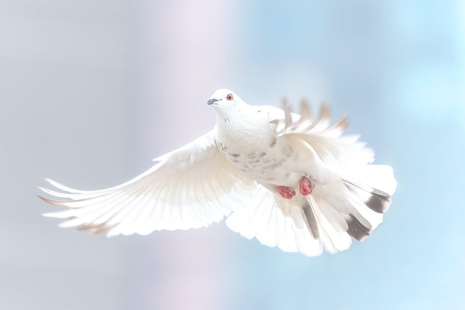 思想良心の自由